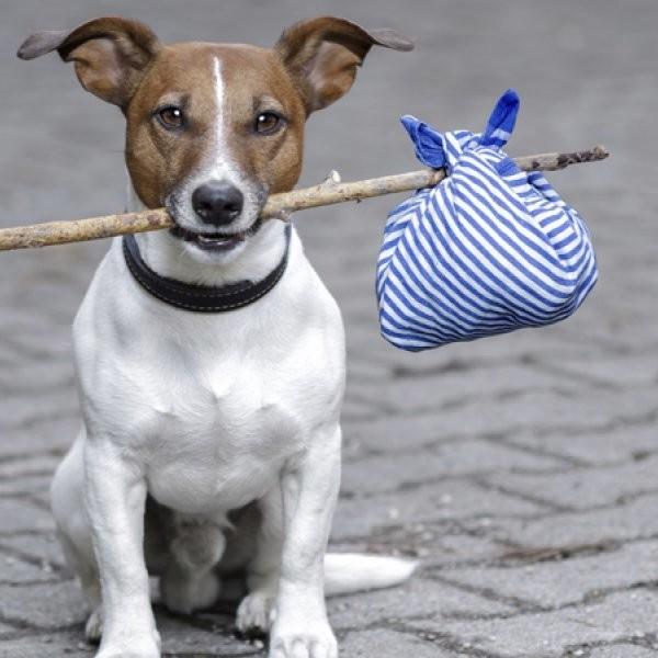 How Do I Travel Internationally with My Dog?