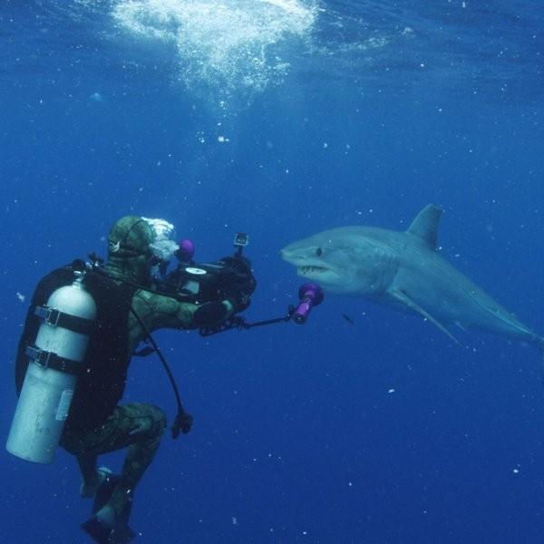 Surviving a Crocodile Bite on Shark Week