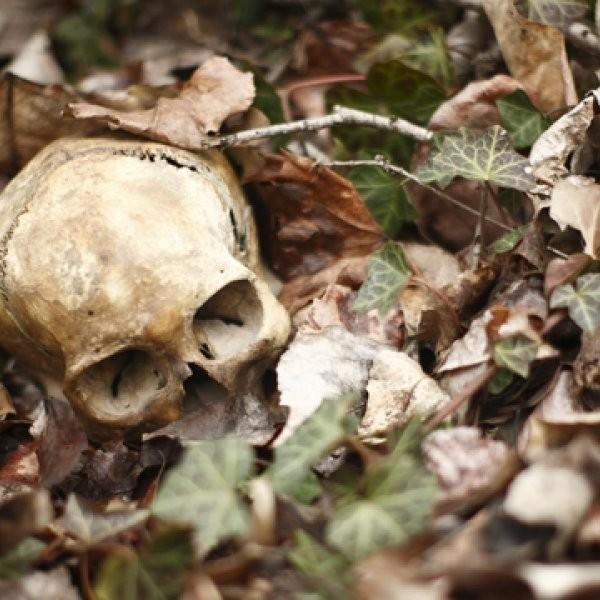 The 10 Worst Ways to Die in the Wild