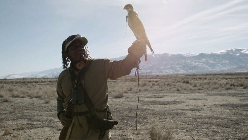 Video: This Guy Will Make You Fall in Love with Falconry