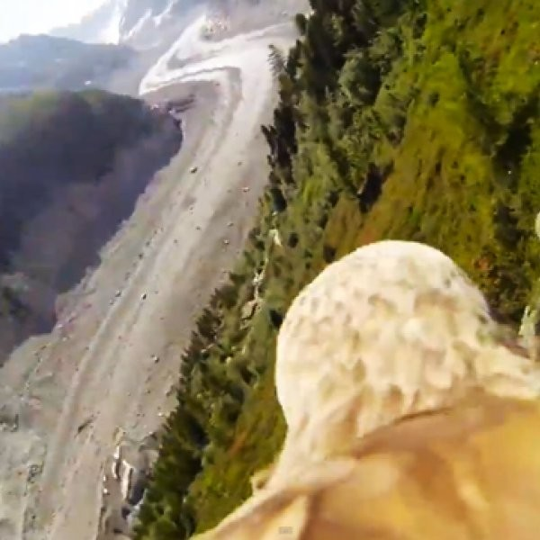 WATCH: GoPro Strapped to an Eagle