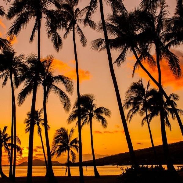 What's Killing Hawaii's Trees?