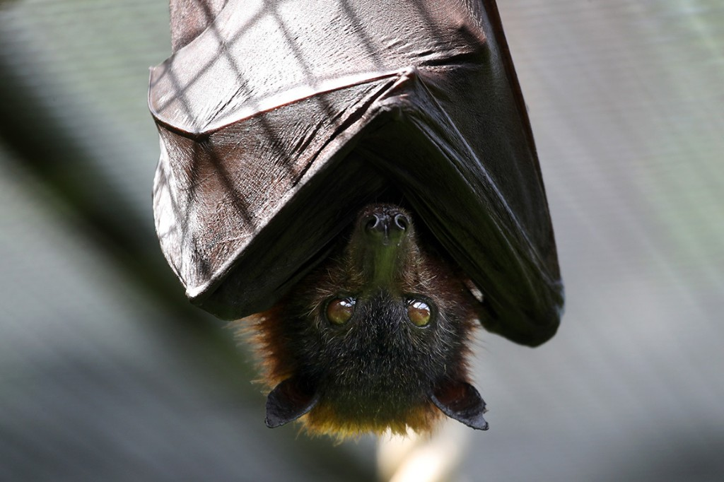 'I'm not Batman': Libertarian presidential candidate makes light of bat bite