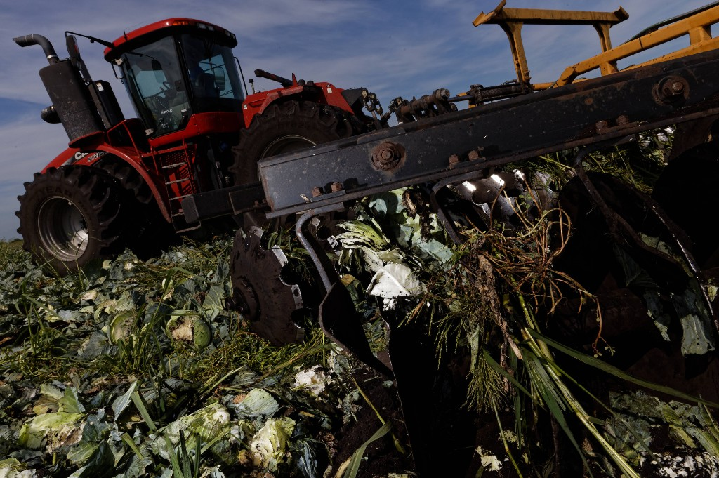 USDA let millions of pounds of food rot while food-bank demand soared