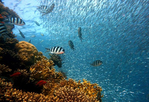 3D Printing Could Save Coral Reefs
