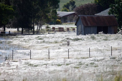 Hordes Of Spiders Are Raining Down On Australia Right Now