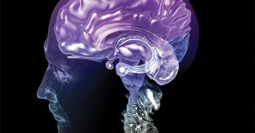 How your brain tells time