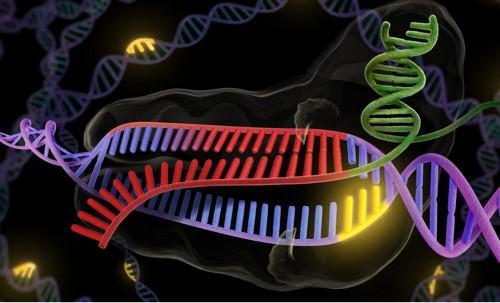 Improved Version Of CRISPR Gene Editing Tool Eliminates Errors