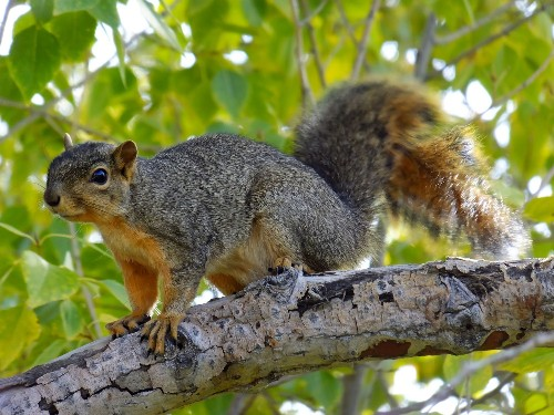 Squirrels are so organized it's nuts