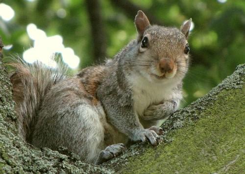 New Squirrel Virus Suspected In Three Human Deaths