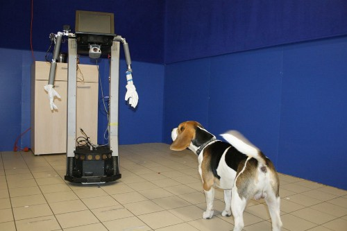 Dogs Are Perfectly Happy To Socialize With Robots