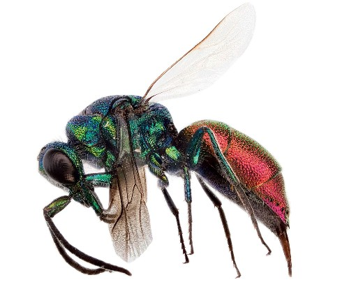 FYI: Do Insects Have Personalities?