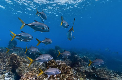 Swim Through The Seven Seas With Google Fish View