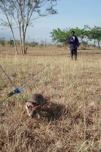 What Landmine-Detecting Plants Can Teach Us About Design
