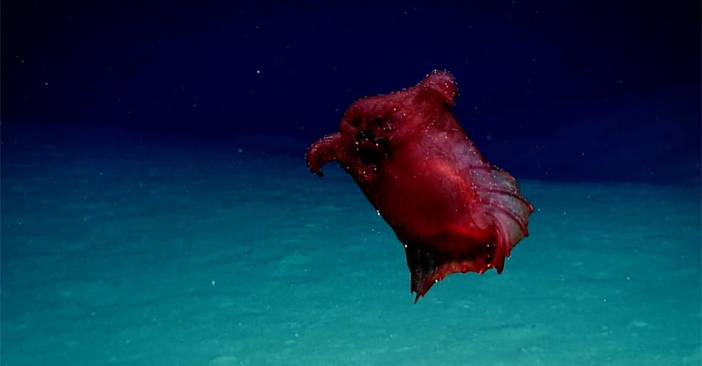 This headless chicken is the deep-sea 'monster' of our dreams