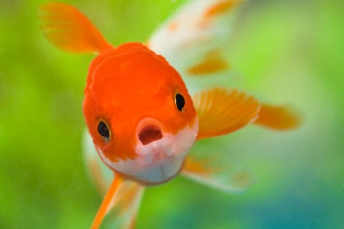 Your Tooth Enamel Might Have Started As Fish Scales