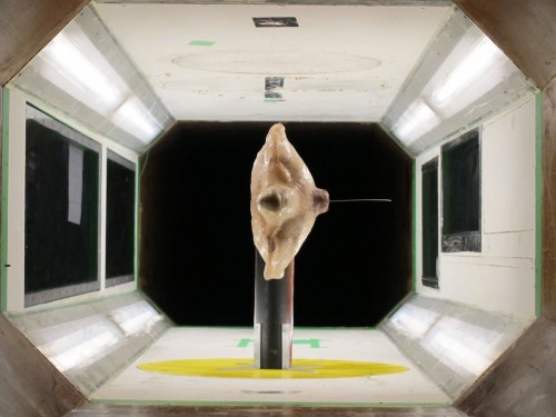 Big Pic: A Sea Turtle In A Wind Tunnel