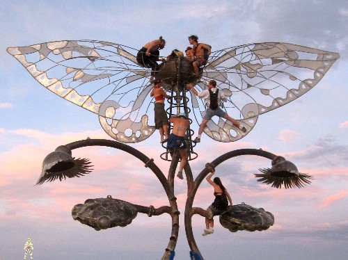 """Disgusting"" Bugs That Infested Burning Man Not Actually Disgusting"