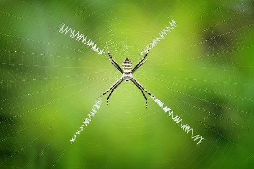 Add Graphene To Spider Silk To Create The Strongest Fiber Yet