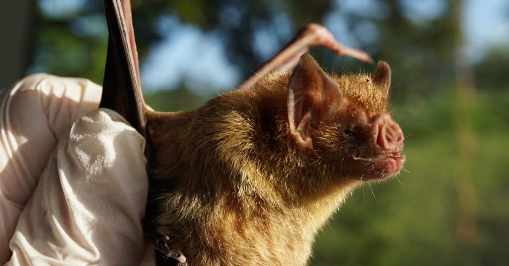 Vampire bats socially distance when they feel sick