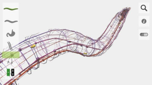 OpenWorm Is An Open-Source Virtual Worm, Accurate In Every Way