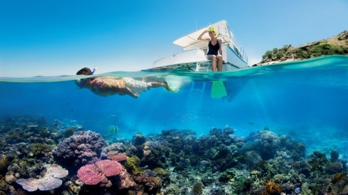 This engineer has a wild plan to save coral reefs from climate change