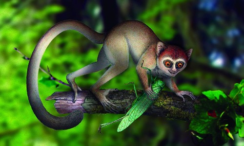 World's Oldest Primate Fossil Discovered
