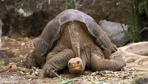 The Preservation Of Lonesome George
