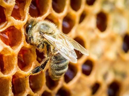Honeybees are surprisingly great at math