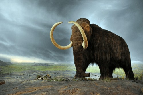 Zombie Mammoths to the Rescue
