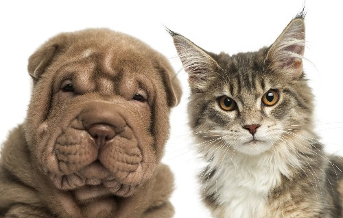 How The Rising Status Of Cats And Dogs Could Doom Biomedical Research