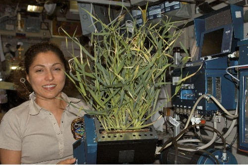 Space-Grown Vegetables Are Safe To Eat, Scientists Announce