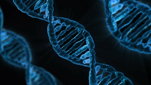Genetically, Schizophrenia Is At Least Eight Separate Diseases