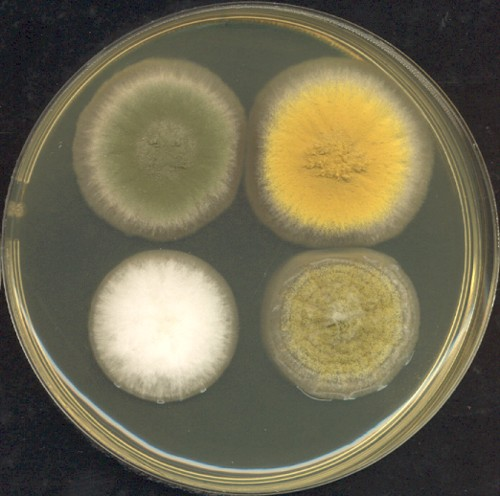 How Fungus And Synthetic Biology Could Save Astronauts On Mars