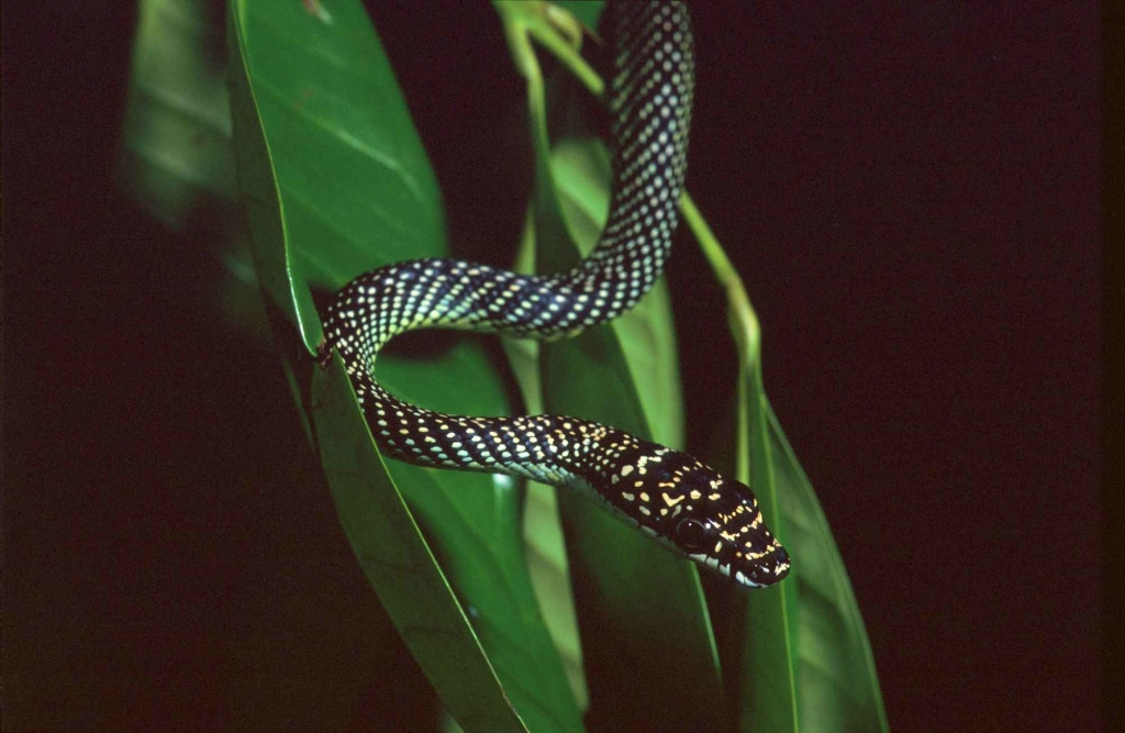 Crazy Snake Fly - Magazine cover