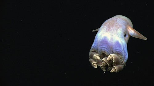 10 GIFs Of Deep-Sea Creatures Encountering A Sub
