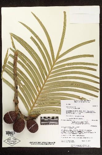 New York Botanical Garden Digitizes Biodiversity History