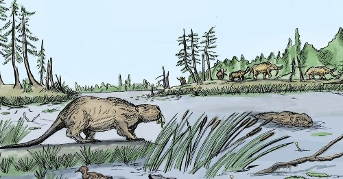 A warming climate spelled doom for giant ice-age beavers | Popular Science