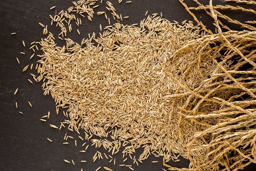 What To Drink While You Wait For Perennial Grains To Revolutionize Agriculture