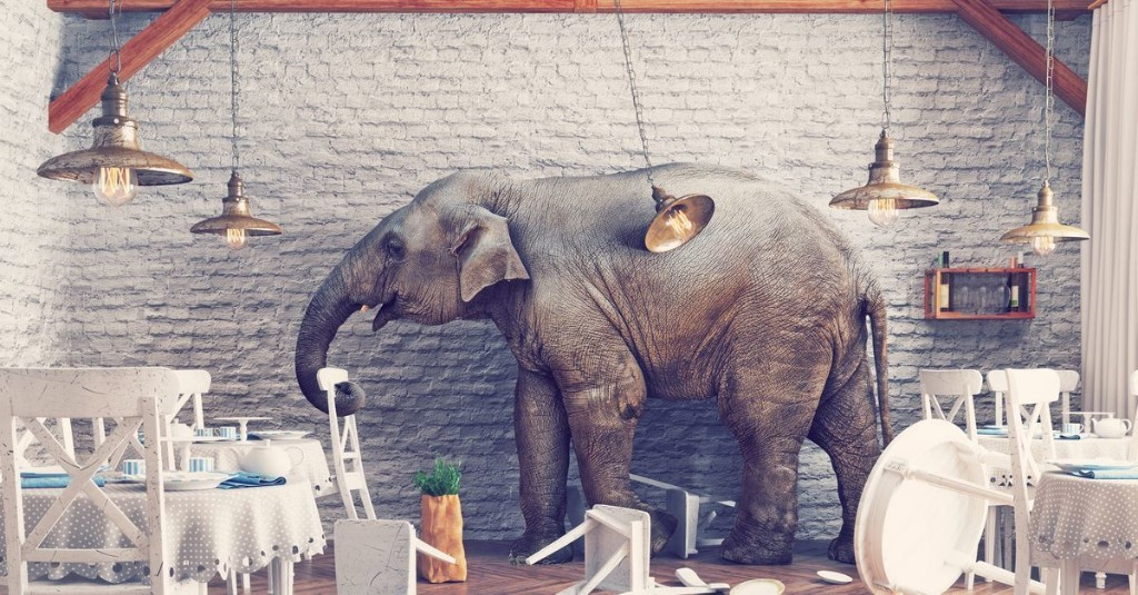 How much acid should you give an elephant? These scientists learned the hard way.
