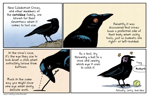 Clever Crows Have an Eye for Tool Use