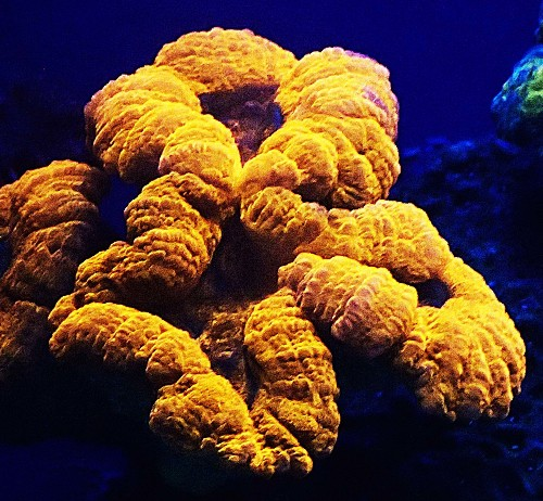 Scientists may finally know why these magnificent corals glow in the dark