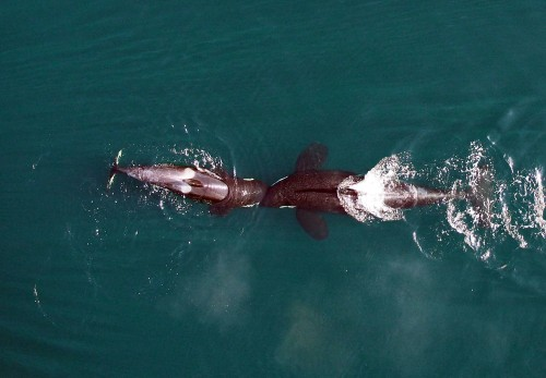 The Week In Drones: Pregnant Whales, Disaster Mapping, And More