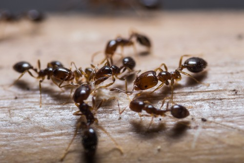 Defend your house against ants—with science