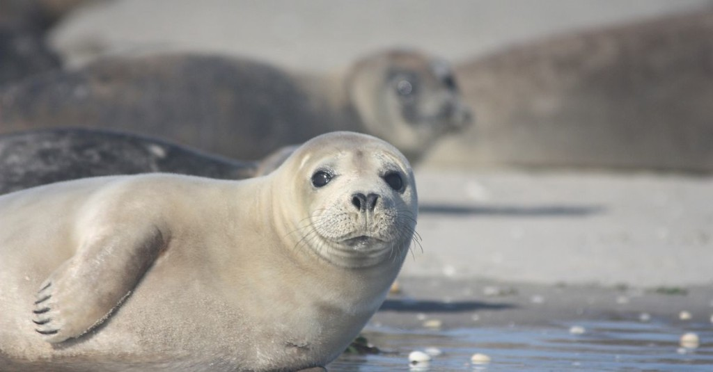 Mass die-offs in marine mammals are accelerating, and climate change will only make it worse