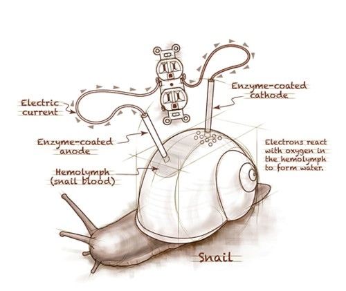 "Rough Sketch: ""A Snail Could Be Used as a Battery"""