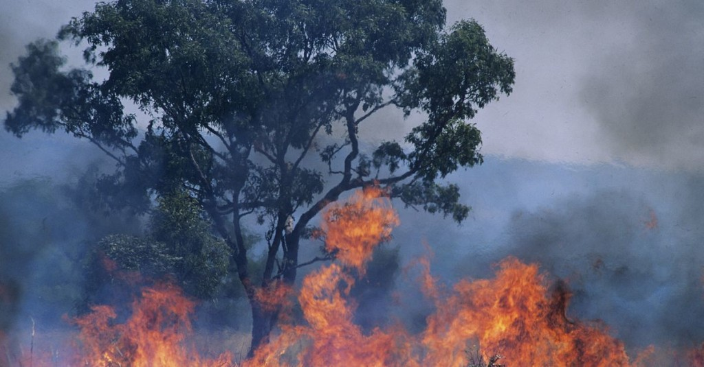Australia's historic bushfires could impact the world's biodiversity forever