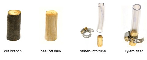 A Cheap, Promising Way to Filter Water: Through A Twig