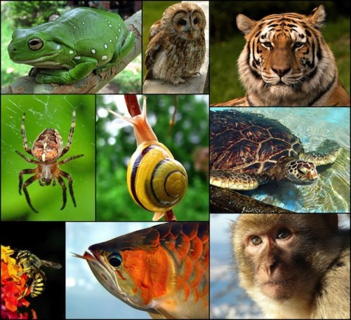 Which Animal Has The Most Extreme Sense of Hearing?