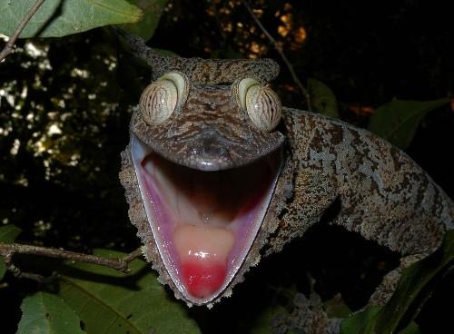 Madagascar Species No Longer Evolving At Breakneck Speed